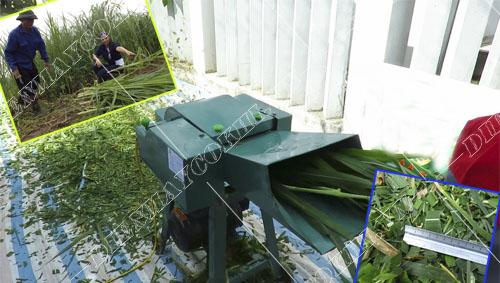 Sở hửu máy băm cỏ nghiền thức ăn cho vật nuôi rẻ nhất tphcm