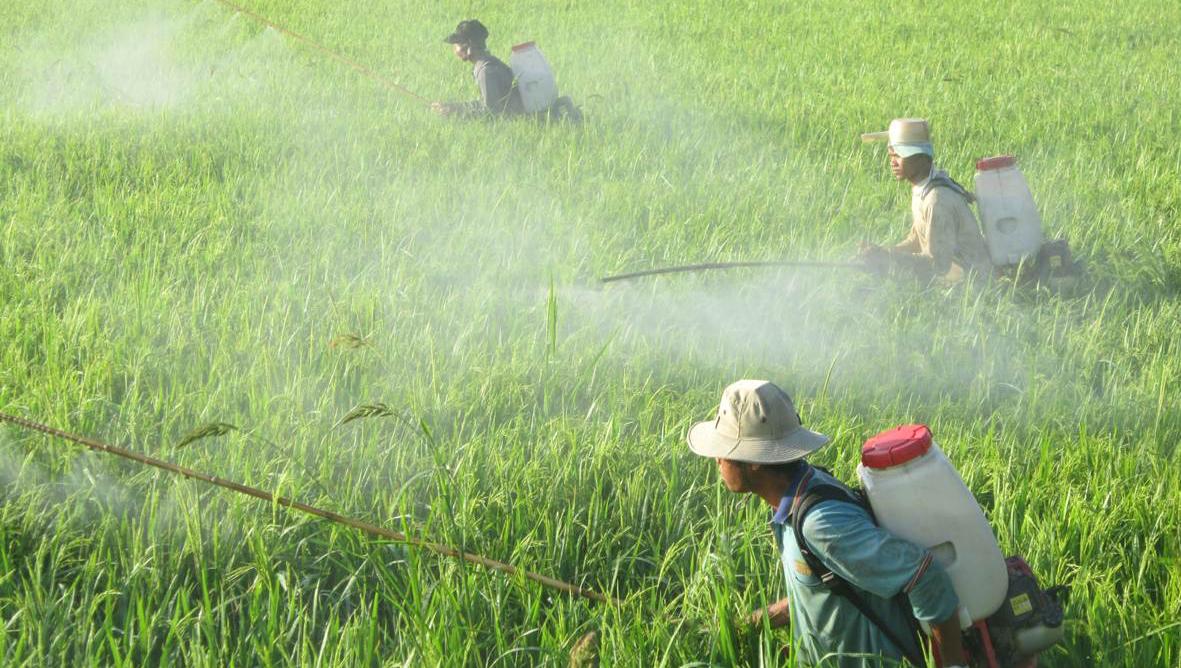 Những lưu ý để sử dụng thuốc trừ sâu an toàn